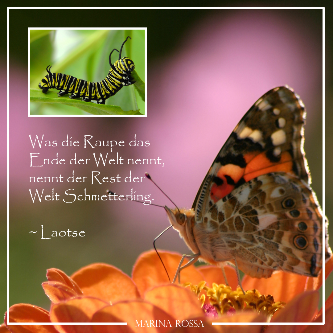 Raupe - Schmetterling