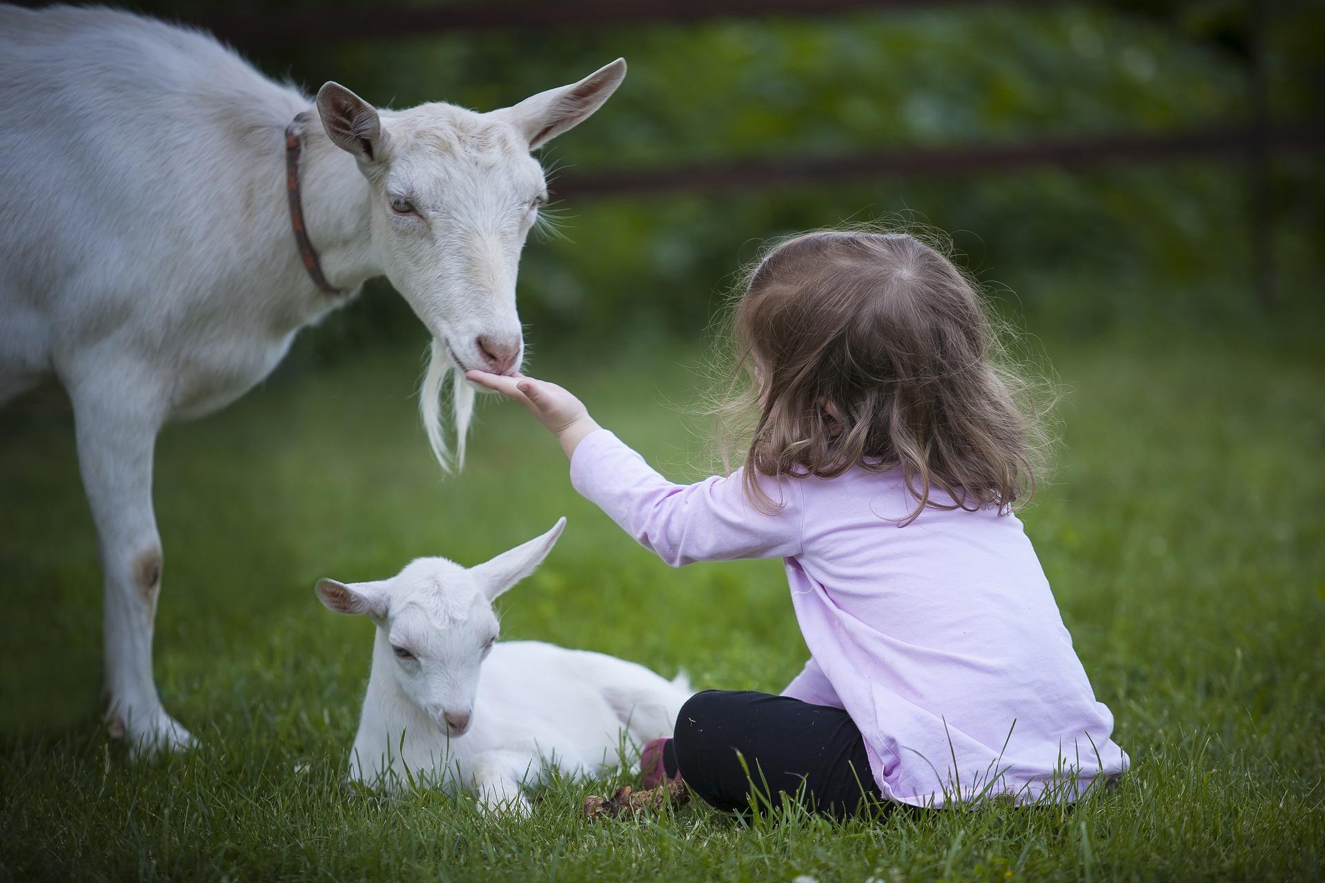 Kind streicheln Ziege